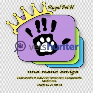 Veterinary clinic Royal Pet H
